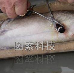 鱼类声学跟踪定位标记
